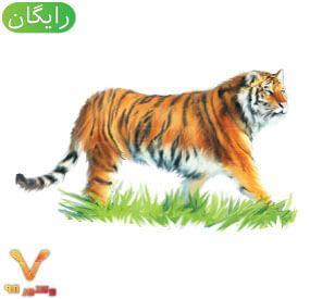 animal-tiger-element