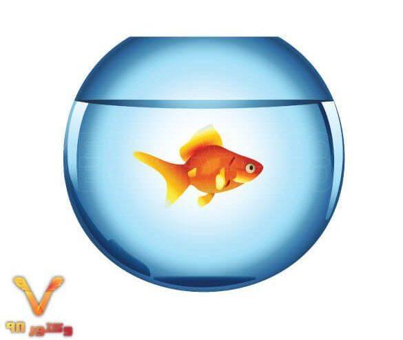 تصویر PNG دوربری شده تنگ ماهی قرمز عید