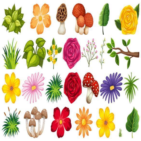 مجموعه وکتور گل و قارچ